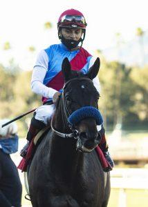 Medina Spirit horse